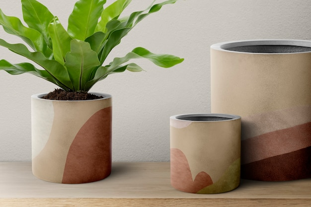 ベージュの鉢にシマオオタニの植物