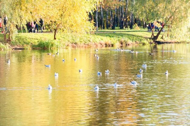 가을 공원에서 호수에 새