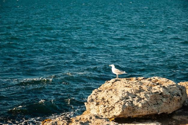 晴れた日のビーチで食べ物を探している鳥。