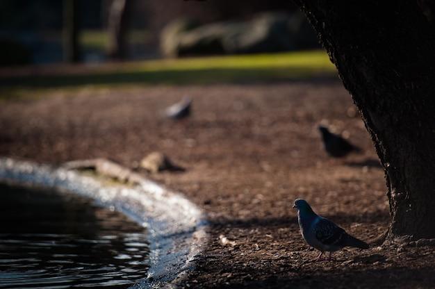 도시 공원에서 연못의 기슭에 새.