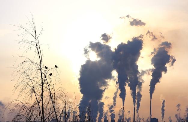 植物の煙のような煙突の上の木の上の鳥。汚染の概念