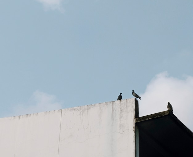 Birds perched on a white wall