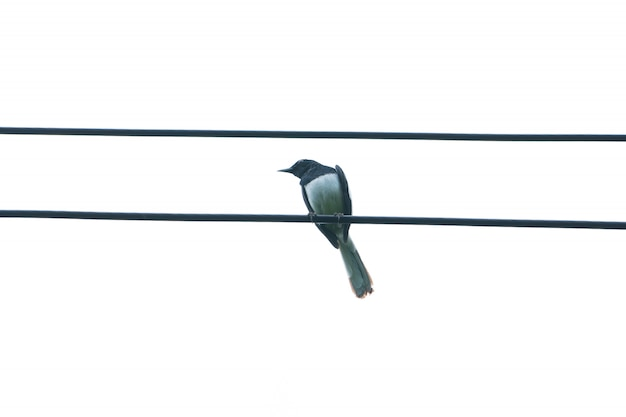 Birds perched on wires.
