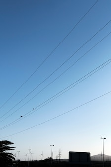 Birds on power lines and city scape