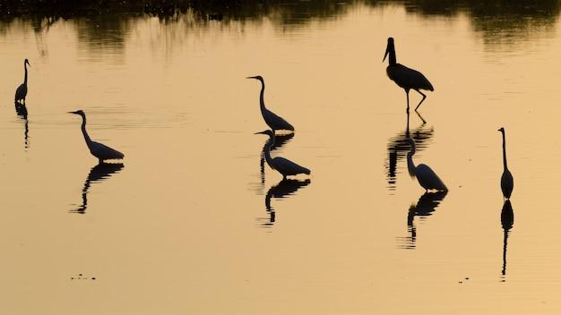 Птицы отражаются в воде из пантанала, бразилия. бразильская дикая природа. силуэт птицы.