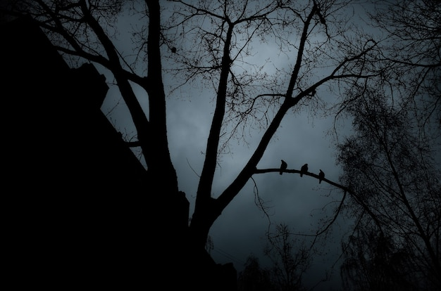 Birds sit on a tree branch around the silhouettes of houses and trees the city plunged into darkness