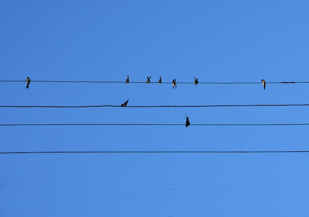 Birds sit on the wires