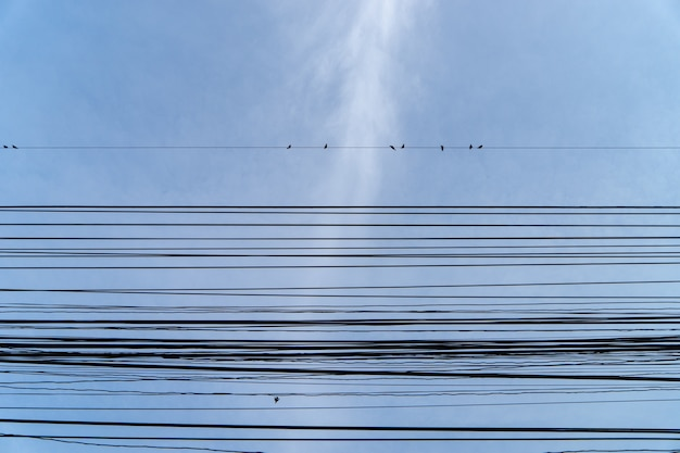 Birds sitting on electrical wire with clear blue sky in background.