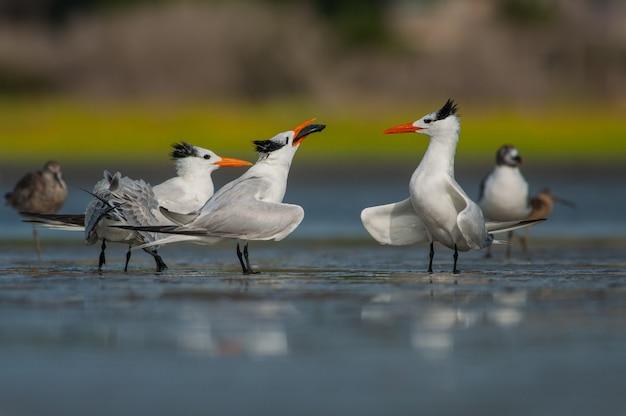 Birds sitting on ice