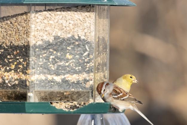 鳥の餌箱の近くに座っている鳥
