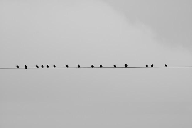 灰色の背景のワイヤーに座っている鳥