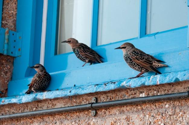 Birds sitting on a window ledge