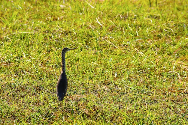 Birds standing in a bright green lawn.