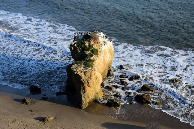 아름 다운 날에 해변에서 바위에 서있는 새