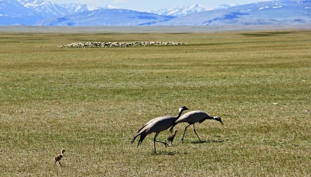 Uccelli nella vasta valle verde con le montagne