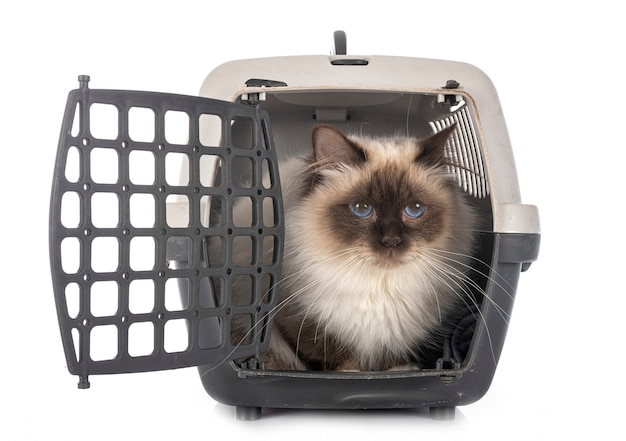 Birman cat and cage