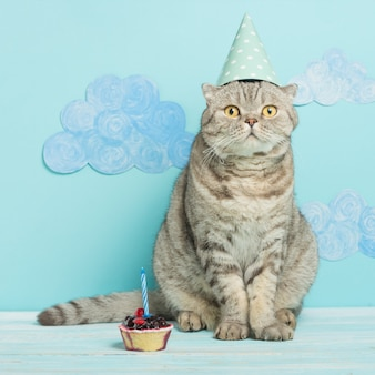 Birthday cat, congratulations on the holiday