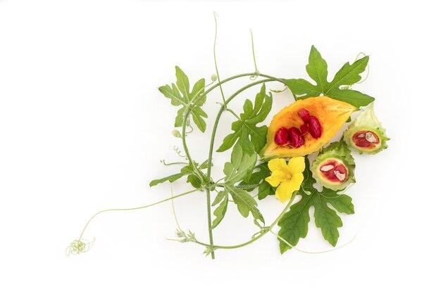ゴーヤの果実、白で隔離の花と緑の葉