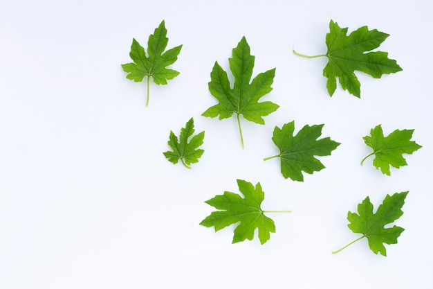 쓴 맛 조롱박 흰색 표면에 나뭇잎