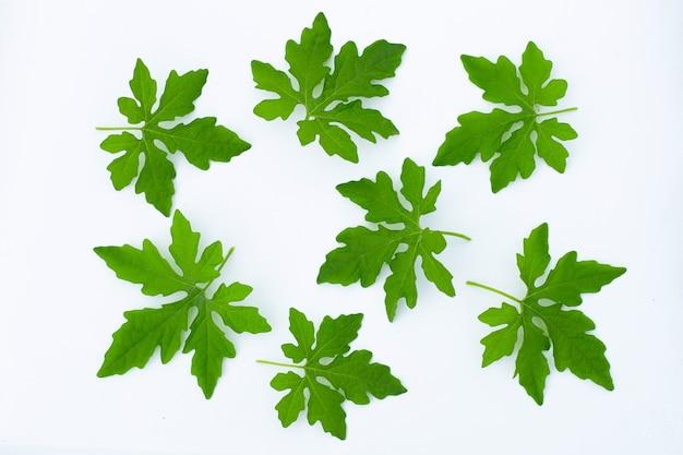 白い壁にゴーヤの葉。上面図