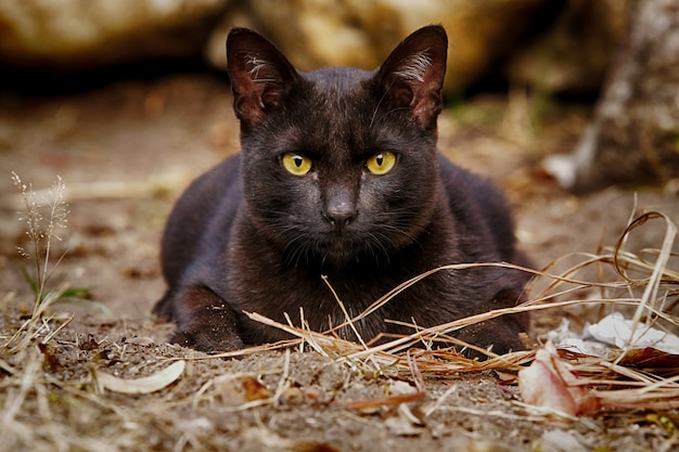 Blac stray cat sitting on the clay ground