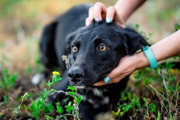 Черная взрослая собака