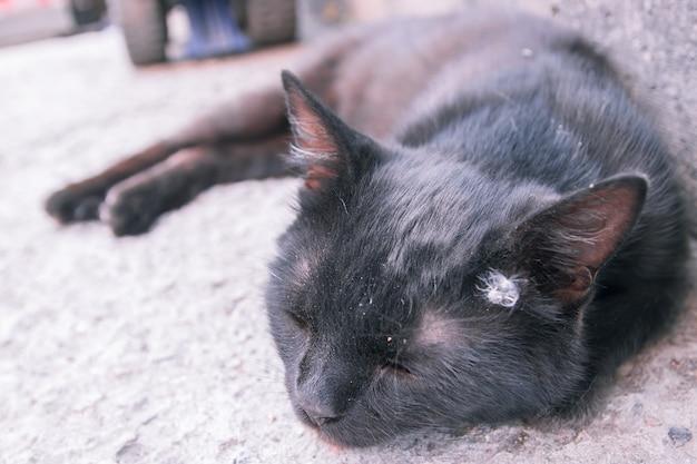 Черная взрослая бездомная кошка лежит в конце дня на узком тротуаре старой улицы.