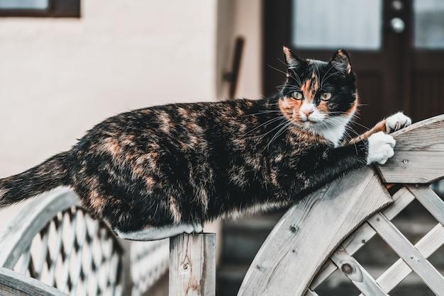 집 밖에 검은 색과 갈색 고양이.