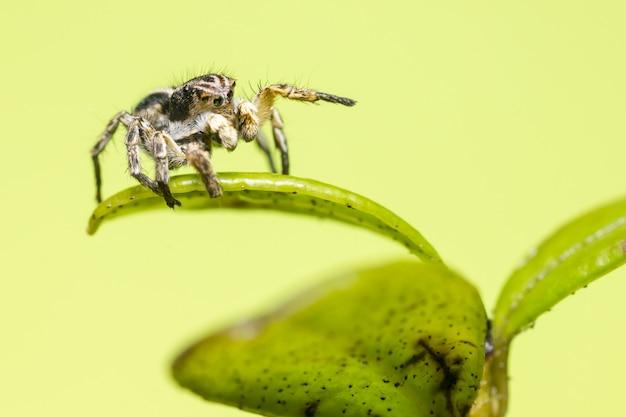 Черный и коричневый паук на зеленом листе