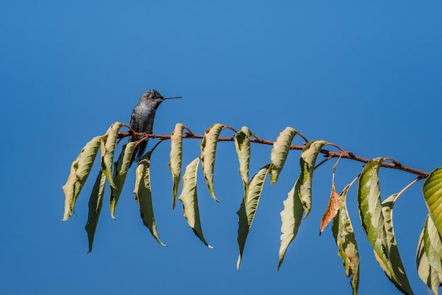 낮 동안 나뭇 가지에 검은 색과 회색 새