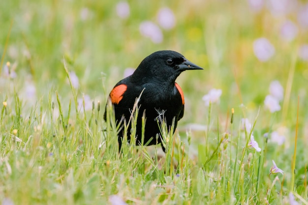 낮 동안 푸른 잔디에 검은 색과 주황색 새