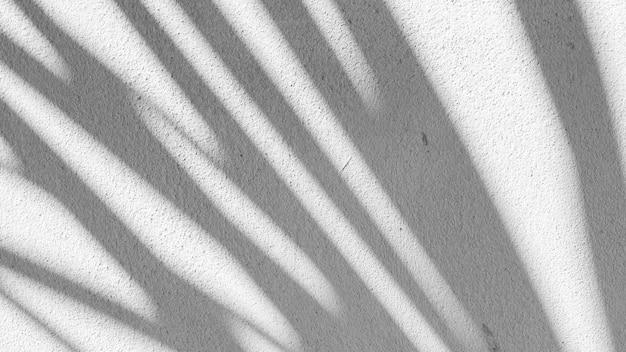 Черно-белый абстрактный фон textuer тени листа на бетонной стене