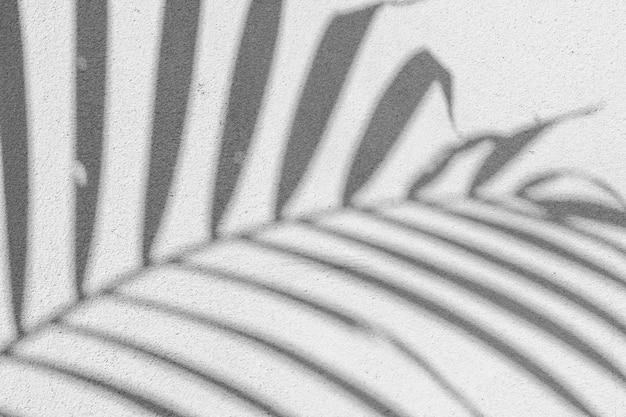 Черно-белая абстрактная второстепенная текстура листьев теней на бетонной стене.