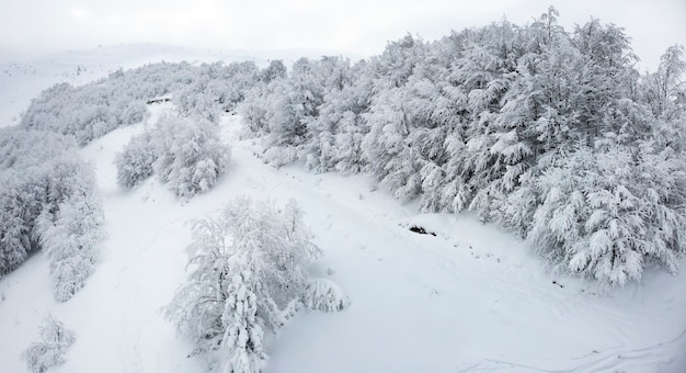 雪と白い霧の空を背景に冬の農場の葉のない森の木々の黒と白の背景。山の冬の風景