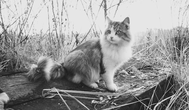 호수에서 로그에 앉아 흑인과 백인 아름 다운 고양이