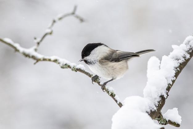 Черно-белая птица на ветке дерева