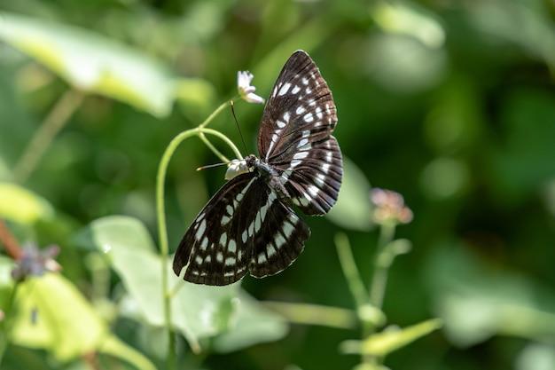 숲에 햇빛이 있는 흑백 나비.