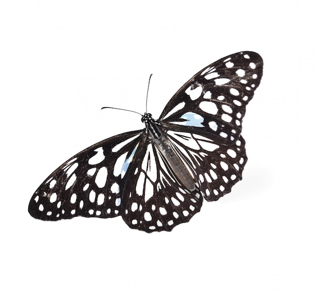 Черно-белая бабочка на белом фоне