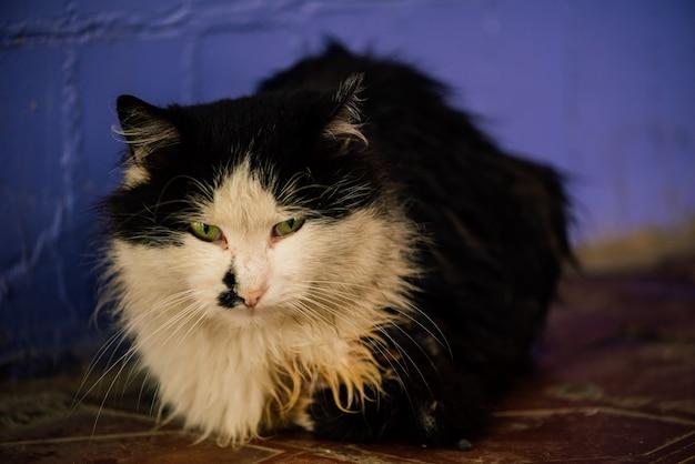 通りの黒と白の猫。紫の壁に黒と白の猫。