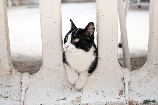 Черно-белый кот сидит между колоннами дома