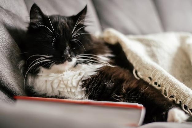 흑백 고양이는 책을 껴안고 책을 읽고 휴식을 취하며 소파에서 잔다