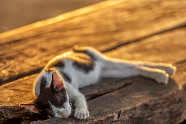 Черно-белый кот спит на деревянном столе на солнце