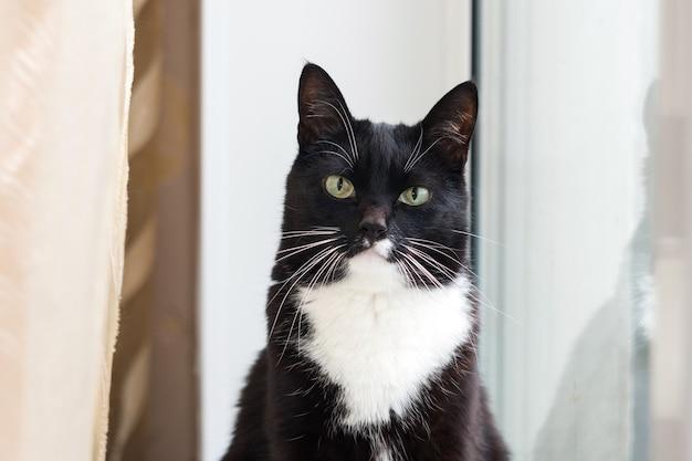 아름다운 눈을 가진 흑인과 백인 고양이. 애완 동물. 고양이가 창문에 있어요. 고양이의 전체 얼굴 초상화.