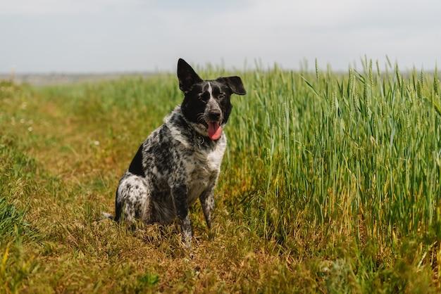 밀밭에 앉아 흑백 색상 개
