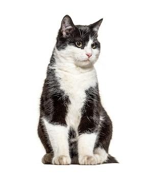 흑인과 백인 제거 고양이 서, 흰색 절연