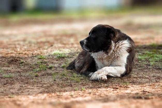 自然にとどまる黒と白の犬