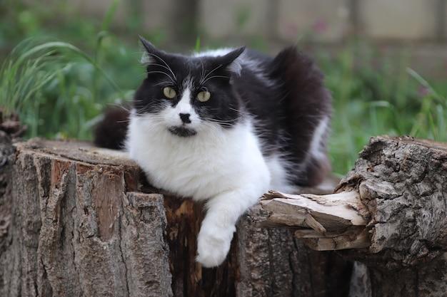 Черно-белый пушистый кот сидит на пне возле клумбы большие зеленые глаза