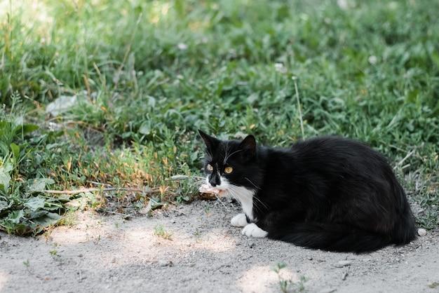 屋外に座っている黒と白のホームレス猫。