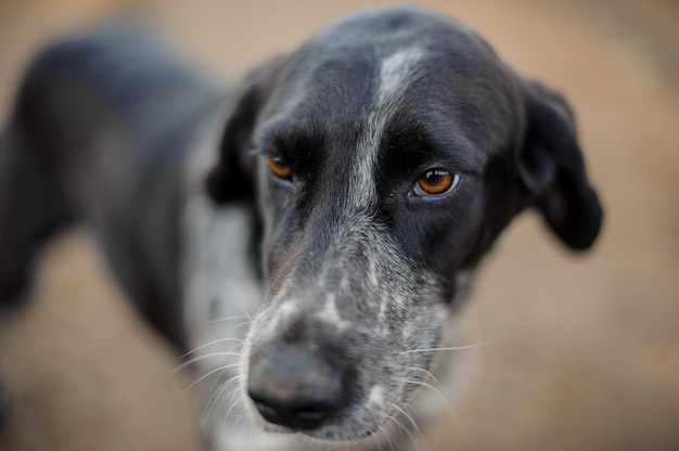よそ見をする白黒のホームレス犬