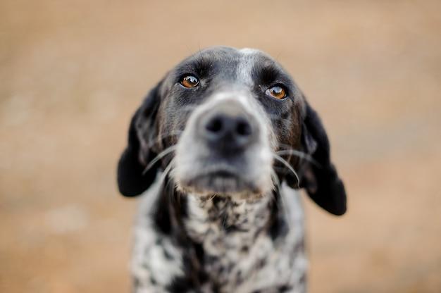 白黒のホームレス犬